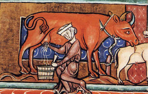 medieval cow